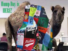 I couldn't resist….even the Geico camel has a Memory Quilt!  Happy hump day everyone!