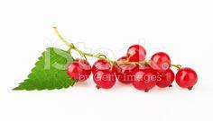 Red Currant with leaf – banque photo libre de droits