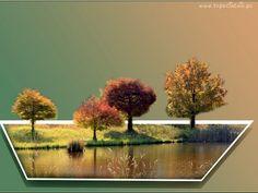 Cztery, Drzewa, Jesień, Woda