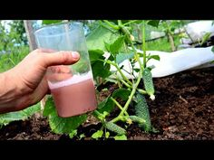 Diet And Nutrition, Glass Of Milk, Drinks, Garden, Plants, A3, Agriculture, Drinking, Beverages