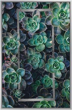 Jonathan Bass Studio Succulents II (Framed Canvas)