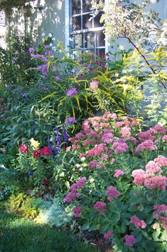 Part shade cottage garden with Solidago 'Fireworks', Sedum 'Autumn Joy', Joe Pye Weed, Lavender 'Munstead', et al.