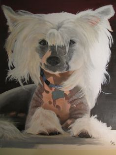 Oil painting of my chinese crested, it was my first production