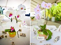 potted orchid wedding centerpieces