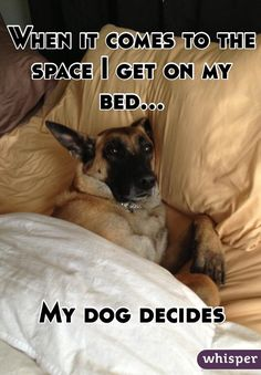 """""""When it comes to the space I get on my bed... My dog decides """""""