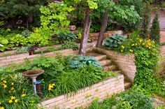 Wonderful Terraced Backyard Ideas 27 Backyard Retaining Wall Ideas And Terraced Gardens - The most crucial part in any type of yard landscaping idea is the Low Water Landscaping, Landscaping On A Hill, Landscaping Ideas, Backyard Ideas, Back Gardens, Outdoor Gardens, Backyard Retaining Walls, Low Retaining Wall Ideas, Terraced Backyard