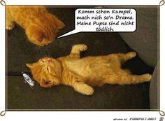 lustiges Bild 'Komm schon Kumpel.jpg'- Eine von 25170 Dateien in der Kategorie 'witzige Bilder' auf FUNPOT.