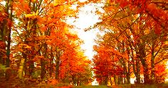 11 Things To Do Before Fall Ends | The Odyssey