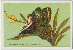 Cigarette Card |