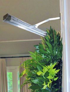 Artificial Lighting For Living Plants