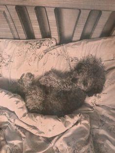 Bailster having a siesta Zzzzzzzz