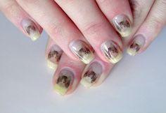Tabby cat nails
