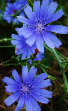 sweet asters that grow on the side of the road Botanical Flowers, Flowers Nature, Exotic Flowers, Purple Flowers, Wild Flowers, Beautiful Flowers, Flower Images, Flower Photos, Garden Trees