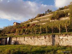 Vineyards in the Saale-Unstrut region of Saxony-Anhalt, Germany Saxony Anhalt, Rhineland Palatinate, Lower Saxony, North Rhine Westphalia, Bavaria, Travel Destinations, Vineyard, Castle, Germany