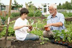 Come fare un orto sinergico e sfruttare le alchimie della natura senza sprechi