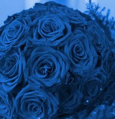 Google Image Result for http://www.best-wedding-plan.com/images/Blue-wedding-flowers.jpg