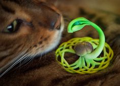 Seed of Yggdrasil: nifty 3d-printed sculpture based on Celtic-style knot in Norse mythology