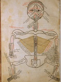 Image from the Tashrīḥ-i badan-i insān / Manṣūr ibn Muḥammad ibn Aḥmad - 15th century