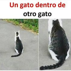 Humor Discover New Memes Risa Humor Chistes Ideas Funny Spanish Memes Funny Animal Memes Cute Funny Animals Funny Animal Pictures Funny Images Funny Jokes Funny Cats Funny Sayings New Memes Funny Spanish Memes, Crazy Funny Memes, New Memes, Really Funny Memes, Stupid Memes, Funny Relatable Memes, Memes Humor, Funny Humor, Funny Animal Jokes