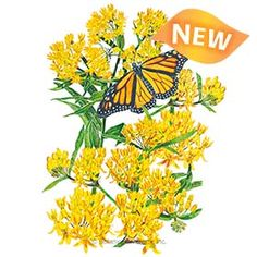 Butterfly Flowers, Monarch Butterfly, Flower Bed Borders, Drought Tolerant, Flower Seeds, Habitats, Flower Gardening, Yellow, Plants