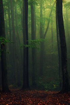Woods...photo by tadzio89, via Flickr