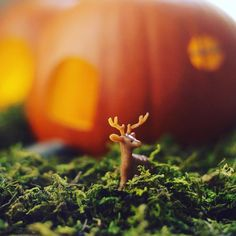Now where did I drop that?  #deer #crafts #adorable #gift #cute #love #instagood #happy #selfie #fun #tiny #fairygarden #fall #halloween