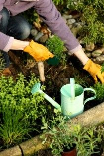 From Garden to Home Remedy: 12 Medicinal Herbs to Grow this Summer