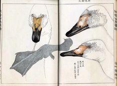 Takeuchi Kakuchi. .   Geese. . lotusgreen.focus.blogspot.com