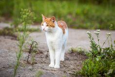 #cat taken with #Samyang 85mm lens