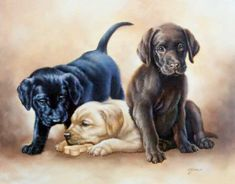 JUDY GIBSON -- three lab puppies in the three lab colors in three views -- One