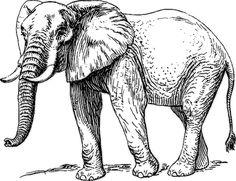 elephant large BW