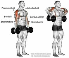 A compound pull exercise. Muscles worked: Lateral deltoid Posterior Deltoid Supraspinatus Brachialis Brachioradialis Biceps Brachii Middle and Lower Trapezii Serratus Anterior Infraspinatus and Teres Minor. Fitness Workouts, At Home Workouts, Fitness Tips, Fitness Motivation, Enjoy Fitness, Video Fitness, Health Fitness, Fitness Journal, Fitness Outfits