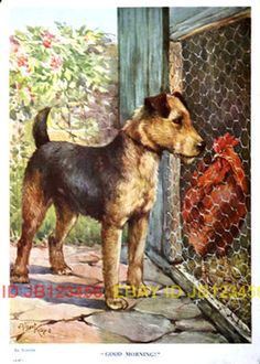 """from British children's book, circa 1920 by Albert Kaye. There is a caption beneath the picture: """"Good Morning!"""". In small print it is ID'd as an Airedale."""
