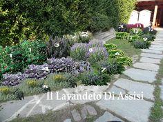 23 Fantastiche Immagini Su Creare Il Proprio Giardino Con Lavande