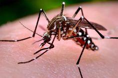 #Dengue: en La Pampa circula el mosquito pero no la enfermedad - El Diario de la Pampa: El Diario de la Pampa Dengue: en La Pampa circula…