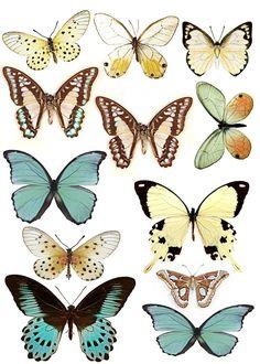 Swirlydoos: Forums / Images & Graphics / Butterflies                                                                                                                                                                                 Más