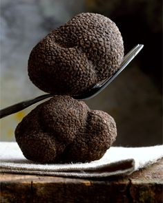 The black truffle has a symbiotic relationship with the oak tree in the Perigord region of France. Roughly 45% of the black truffle crop is found in  southeastern France.
