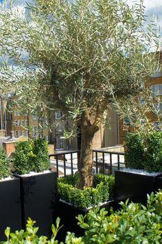 Roof Terrace Design London | Roof terrace planters | Roof terrace garden design…