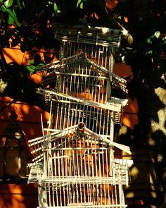 #shadows #newolreans #nola #photograpgy #windupbirdcage #channelorange #birdcage #trees #orange #green #texture #shade #art #canon #rebel #revel #frenchquarter #quarterrat #urbanexplore #dropsthemicandwalksaway by asapserpicofox