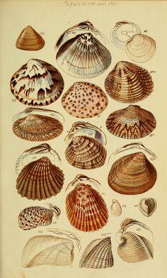 Antique Illustration, Nature Illustration, Botanical Drawings, Botanical Prints, Arte Peculiar, Scientific Drawing, Image Nature, Nature Posters, Vintage Drawing