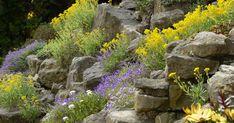 Pflegeleicht und voll im Trend: Mit einem eleganten und pflegeleichten Steingarten bekommt Ihr Garten das gewisse Etwas.