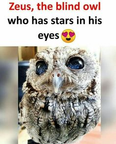 I wish he himself could see those charming eyes. Wierd Facts, Wow Facts, Intresting Facts, Wtf Fun Facts, Funny Facts, Some Amazing Facts, Interesting Facts About World, Unbelievable Facts, Cute Funny Animals