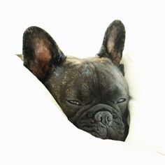 """I hit snooze for 3 hours this morning"", Sleepy French Bulldog."