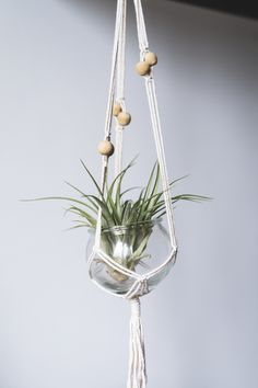 Air plant in glass Colorful Plants, Unique Plants, Cool Plants, Indoor Flowering Plants, Air Plants, Vase Shapes, Leaf Shapes, Best Bathroom Plants, Shower Plant