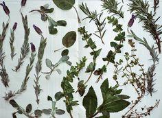 drying herbs//pfitzgerald & amy merrick