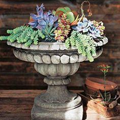 bird bath makes a lovely planter.