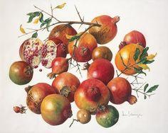 Phyllostachys virdis (1930) by Ann Schweizer