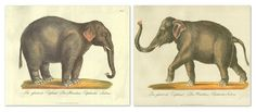 This handsome pair of vintage reproductions was printed 25 years ago from antiques in the William Stafford archive. Swiss printseller and bookseller Karl Joseph Brodtmann was one of the most...