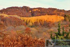 Φθινοπωρινά χρώματα στην ορεινή περιοχή Μακρυπλαγίου - Πολυκάρπου Δράμας 2016 (φωτογραφίες) - DRAMAnia.gr Drama 2016, Painting, Art, Art Background, Painting Art, Kunst, Paintings, Performing Arts, Painted Canvas