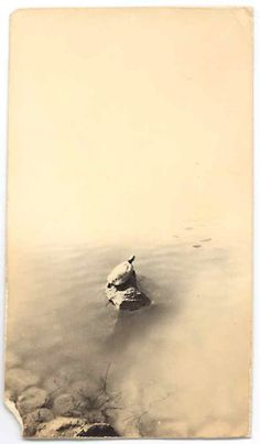 Masao Yamamoto (photographs as objects)
